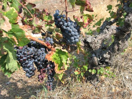 In the Vineyard a Sermon from Star of Bethlehem Lutheran Church