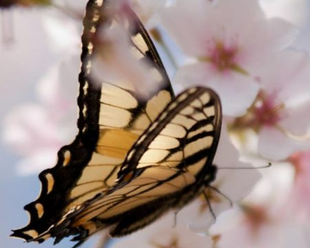 Butterflies are a sign of new life. That is why they go so well with Easter!