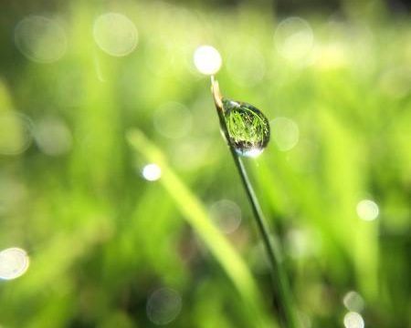 Dew drops can hold a vision of God's creation for just a second as they drip away.