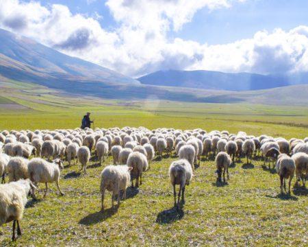 Psalm 23 The Good Shepherd