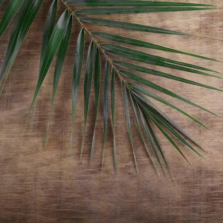 Luke 19 Palm Sunday